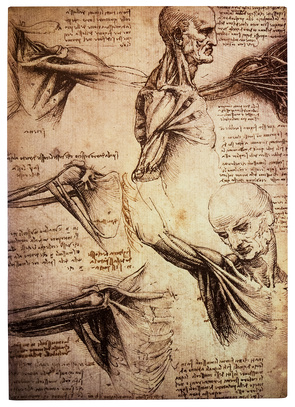 Drawings by Leonardo DaVinci